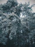 Donker bos, de wintersneeuw Stock Afbeeldingen