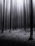 Donker bos met oneindige bomen Royalty-vrije Stock Foto