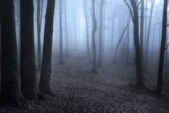 Donker bos met silhouetbomen en blauwe mist royalty-vrije stock foto's