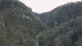 Donker bos met zwarte bomen klem Hoogste mening van het sombere grijze bos Donkere bos met het grijze bloemen bang maken royalty-vrije stock afbeelding