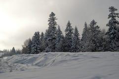 Donker de winterlandschap Stock Fotografie