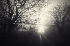 Donker geheimzinnig achtervolgd bos met spooksilhouet op weg stock afbeelding
