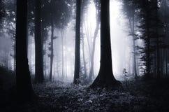 Donker geheimzinnig blauw bos met mist bij nacht royalty-vrije stock afbeelding