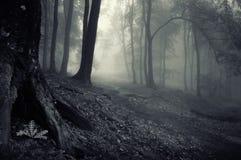 Donker geheimzinnig bos met mist Stock Foto's