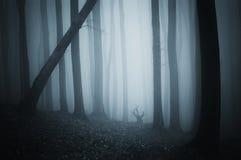 Donker geheimzinnig bos met mist op Halloween-nacht royalty-vrije stock fotografie