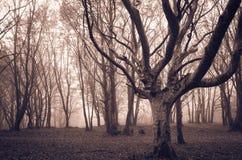 Donker geteisterd bos door spoken Stock Foto's