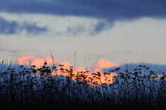 Donker gras, zonsondergang op de achtergrond Royalty-vrije Stock Afbeelding