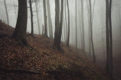 Donker griezelig bos met mist in de recente herfst royalty-vrije stock afbeelding