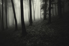 Donker griezelig griezelig bos met mist Royalty-vrije Stock Afbeeldingen