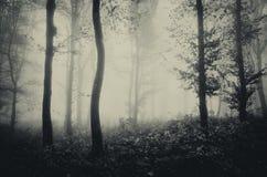 Donker griezelig Halloween-bos met mist royalty-vrije stock foto