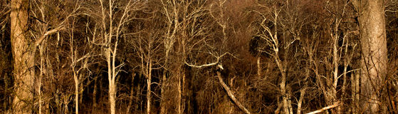 Donker hout Stock Foto
