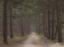 Donker humeurig bos met weg door het vroege donkere ochtendgang royalty-vrije stock foto