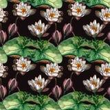 Donker naadloos waterverf realistisch botanisch patroon met witte moeraslelies royalty-vrije illustratie