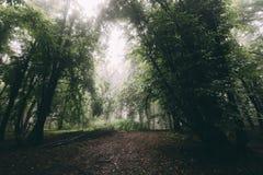 Donker nevelig groen hout in de zomer stock afbeeldingen