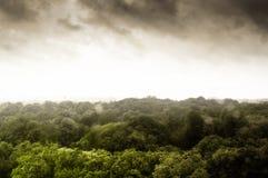 Donker onweer over klein bos Stock Afbeelding