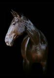 Donker paard Stock Foto's