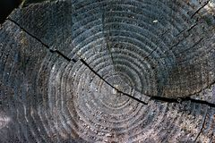 Donker plankenhout, differents patronen en barsten royalty-vrije stock foto's