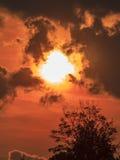 Donker Silhouet van een Boom tegen Oranje Zonsondergang Royalty-vrije Stock Foto's