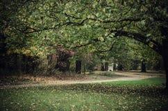 Donker somber park Royalty-vrije Stock Afbeelding