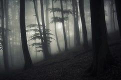Donker verrukt bos met geheimzinnige mist Royalty-vrije Stock Afbeeldingen