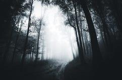 Donker wegtrog achtervolgd bos stock foto's
