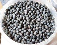 Donkerblauwe bosbessen in een emmer Royalty-vrije Stock Foto's