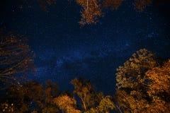 Donkerblauwe nacht sterrige hemel boven het geheimzinnigheid de herfstbos met oranje en gele bomen Lange blootstellingsfoto van m Royalty-vrije Stock Foto's