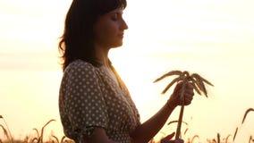 Donkerbruin meisje met kleding op zonsondergangachtergrond De vrouw houdt een boeket van rijpe tarweoren, zacht wat betreft haar  stock footage
