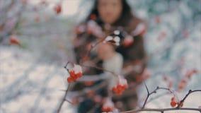 Donkerbruine modieuze vrouw dichtbij struik met rode bessen langzame motie stock videobeelden