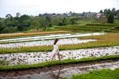 Donkerbruine vrouw die in witte kleding op rijstterrassen lopen, Bali Padievelden van Jatiluwih De grafische lijnen en verdant royalty-vrije stock fotografie