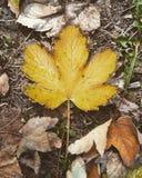 Donkerdere vibe in dit herfstblad stock foto's