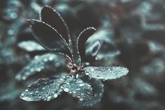 Donkere Bladeren met Waterdalingen Royalty-vrije Stock Afbeeldingen