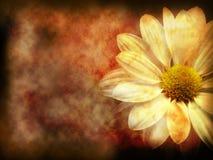 Donkere bloemengrunge Stock Afbeeldingen