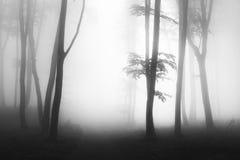Donkere bomen met backlight in mistig bos Royalty-vrije Stock Fotografie