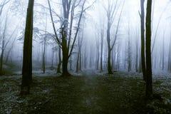 Donkere bomen met zichtbare wortels in een bos met mist Stock Fotografie