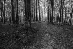 Donkere bomen van het bos in zwart-wit Royalty-vrije Stock Fotografie