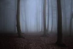 Donkere bomensihlouettes met griezelige mist royalty-vrije stock afbeelding