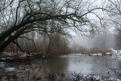Donkere boom boven het bevroren smeltende meer Royalty-vrije Stock Afbeelding