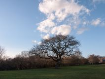 donkere boom op gebied met hierboven wolken, gras hieronder, en blauwe hemel Stock Foto's