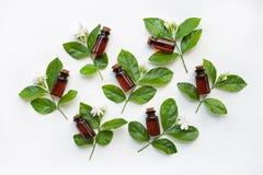 Donkere bruine Flessen etherische olie met jasmijnbloem Royalty-vrije Stock Fotografie