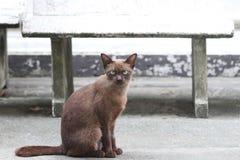 Donkere bruine kattenzitting op de concrete grond een klein geacclimatiseerd vleesetend zoogdier met zacht bont royalty-vrije stock afbeeldingen