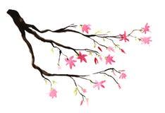Donkere bruine tak met heldere roze bloemen en groene knoppen Het symbool van de lente Hand-drawn waterverfillustratie vector illustratie