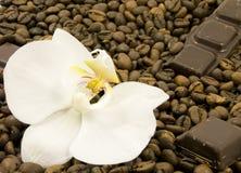 Donkere chocolade en bloem Royalty-vrije Stock Fotografie