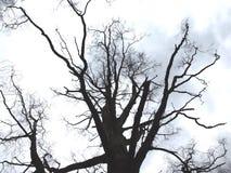 Donkere dag onder de boom Royalty-vrije Stock Afbeeldingen