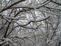 Donkere die takken van bomen met witte sneeuw worden behandeld Royalty-vrije Stock Foto