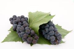 Donkere druif met blad Royalty-vrije Stock Afbeeldingen