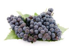 Donkere druif met blad Stock Afbeeldingen