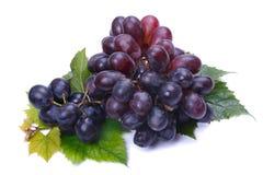 Donkere druiven Stock Foto's