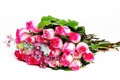 Donkere en lichtrose rozen Stock Afbeeldingen