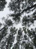 Donkere Forrest Stock Fotografie